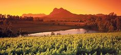 Beautiful pic of Paarl. About 50 km from Cape Town, Paarl is situated beneath a large granite outcrop formed by three rounded domes, the prominent one named Paarl (which means pearl) rock. Zimbabwe, Port Elizabeth South Africa, South Africa Tours, Wine Safari, African Safari, Africa Travel, Cape Town, Places To See, Photos
