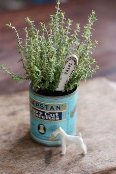 Thyme herb (Thymus vulgaris).