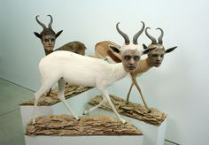 Kate Clark. Lit From Within. 2009.  Gazelle hide, foam, clay, pins, thread, rubber eye, cardboard, wood. lifesize.