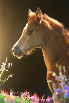 #spring #foal