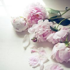 roses Rosas pink flowers Peonies are perfect Amazing Flowers, My Flower, Pink Flowers, Pretty In Pink, Beautiful Flowers, Prettiest Flowers, Pink Petals, You're Beautiful, Pink Roses