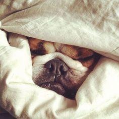 snuggling.
