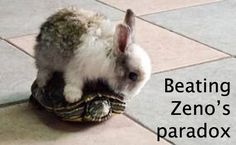 Zeno_Paradox_Meme_Rabbit_Turtle.jpg (500×308)