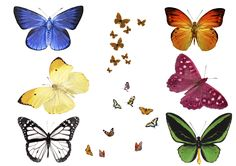 free photo Butterfly Overlays, Realistic Natural flying butterflies Photo layer, free Professional Photoshop effect, png file