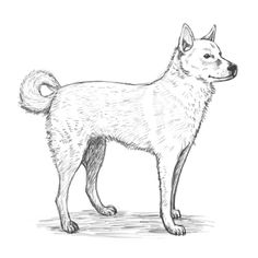 Are you looking for a tutorial on How to draw dog? here at the Drawing Factory you'll find a complete, step by step guide to achieve your drawing goal and much more! Drawing Lessons, Shiba Inu, Easy Drawings, Moose Art, Step Guide, Goal, Creative, Drawing Tutorials, Painting