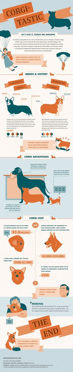 Over the past few years, corgis have risen up the pop culture ladder. Let's take a moment to learn more about the breed. * I love corgis, I love my Corgi, Red* The Bloodhound Gang, Mini Corgi, Welsh Corgi Pembroke, Corgi Facts, Corgi Mix, Corgi Puppies, Teacup Puppies, Beagle Dog, I Love Dogs
