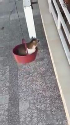 Cat's Cool Life 😎 – Sweeties - Katzenbilder Cute Cat Gif, Cute Funny Animals, Cute Cats, Funny Cats, Gato Gif, Video Chat, Gatos Cats, Cute Creatures, Funny Animal Videos