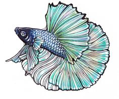 betta fish drawing - Google Search                                                                                                                                                      More
