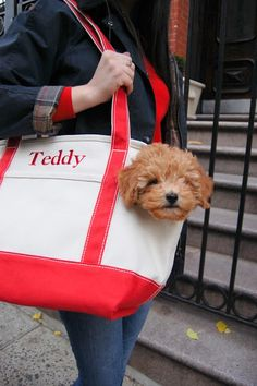Totally Totable. This is beyond cute! OMG.....this looks just like my Teddy:) So Cute!