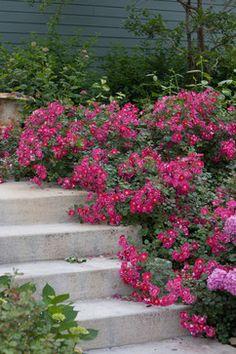 Farmhouse Landscape Design Ideas, Pictures, Remodel and Decor