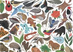 I love the work of Charley Harper. This particular image is from the Golden Book of Biology.