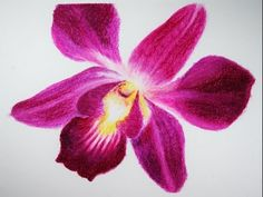▶ How to Draw a Flower Oil Pastels Orchid, Pastel a Oleo Flor Orquidea Oleo pastel - YouTube