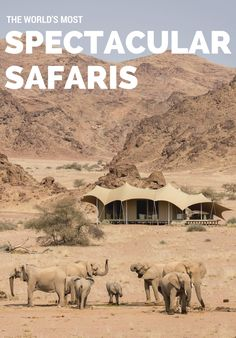 It's no secret why a safari tops our travel wish list: the dreamy luxury tents, unparalleled stargazing, once-in-a-lifetime exotic wildlife-viewing. Read on for the 11 camps we're swooning over. Out Of Africa, West Africa, South Africa, Glamping, Desert Life, Camping Places, Destination Voyage, African Safari, Africa Travel
