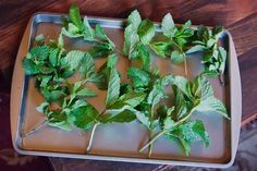 Just about everyone will enjoy a cup of refreshing tea. Many people use mint in its fresh form but using dry mint leaves for tea is also widely practiced. A cup of boiled water poured over this dried aromatic herb and your favorite sweetener makes a wonderfully soothing tea. While pure mint tea is good, a bit of dried mint also helps to enhance the...