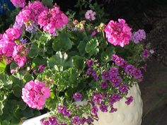 Ju Floral Wreath, Wreaths, Plants, Home Decor, Gardens, Accessories, Homemade Home Decor, Door Wreaths, Flora