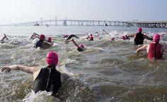 2011: Swam, 2012: Swam, 2013: In Training!