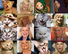 Lesley Knope + Cats = Internet / Time