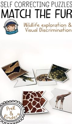 Preschool and kindergarten science activity on matching zoo animals with their fur. Skills practiced include visual discrimination, attention to detail, identifying comparing and contrasting real animals. This is great lesson plan to support zoo themed lesson plans. For teachers and homeschooling parents.
