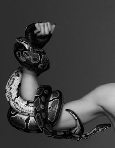 Two headed serpent. Reptiles, Lizards, Ball Python, Real Friends, The Villain, Dragon Age, Black And White Photography, Beauty And The Beast, Ideias Fashion