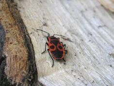 10 aprócska lény, ami mind megbújhat a lakásodban - Otthon | Femina Moth, Insects, Mindfulness, Consciousness