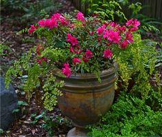 Spring amidst drought in Irvin and Pauline's garden in California   Fine Gardening