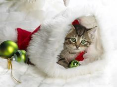 So many cute kittens videos compilation 2019 Cute Kittens, Baby Kittens, Cats And Kittens, Cats Bus, Christmas Kitten, Christmas Animals, Christmas Humor, Christmas Holiday, Simple Christmas