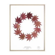 Herbarium is known for its beautiful, timeless pressed nature compositions - be they flowers, or exotic plants. Fuelled by a passion for the natural environment a. Nature Decor, Nature Crafts, Art Floral, Herb Art, Leaf Projects, Diy Projects, Dry Plants, Christmas Card Crafts, Pressed Flower Art