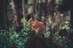 Breathtaking photograph of the wonderful spring time #photo #photography #spring #nature #animal #squirrel #forrest