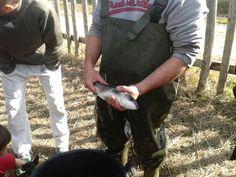 Pesca del cefalo