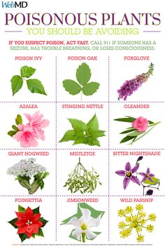 Vertical Gardens A guide to common poisonous plants and how to avoid them. - Giant hogweed is stronger than poison ivy. It burns, blisters, or causes blindness. Other plants cause death. Find out more about common poisonous plants and how to avoid them. Poison Ivy Plants, Poison Garden, Poison Sumac Plant, Survival Life Hacks, Survival Skills, Organic Gardening, Gardening Tips, Gardening Magazines, Gardening Books