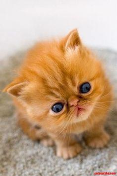 Cute kitten - http://cutecatshq.com/cats/cute-kitten-7/