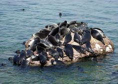 The Special and Mysterious Seals of Siberia's Lake Baikal