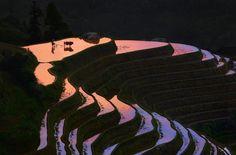 Longji - Taken end of afternoon in the wonderful place call Longji rice field terrace in Guangxi Province