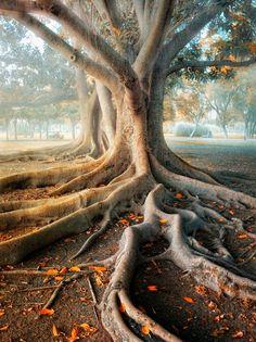 Les arbres les plus beaux du Monde - Séville - Andalousie - Espagne
