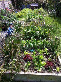 Green shoots Green, Plants, Travel, Viajes, Destinations, Plant, Traveling, Trips, Planets