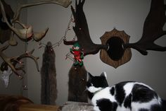 2013 - Night #3 Oreo our cat is trying to figure out how to help Jingle Popinkins get untangled....lol