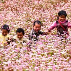 Buckwheat Flower field is covering the naive smiles.