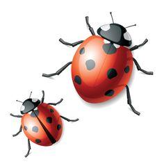 Vivid Ladybug design vector