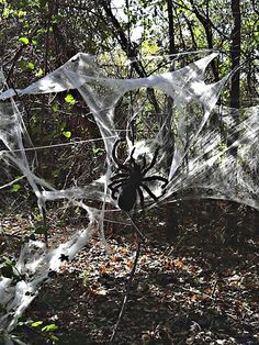Scary spider in huge spider web