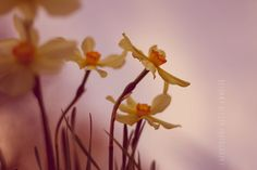 Flower Photography, 8x12 Print, Wildflower Print, Nature Photography, Narcissus Print, Dreamy Photography, Spring Decor, Floral Photography