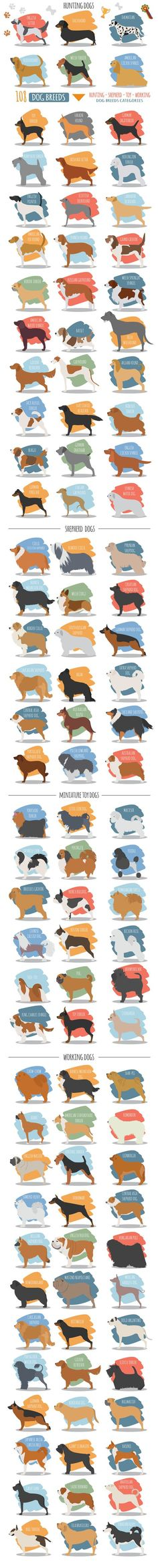 DOG breeds BIG set  @creativework247