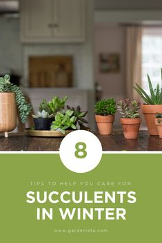 Make sure your succulents survive the winter indoors with these 8 helpful tips from the editors of Gardenista. Garden Yard Ideas, Diy Garden, Garden Care, Hydroponic Farming, Hydroponics, Container Gardening, Gardening Tips, Indoor Gardening, Inside Plants