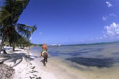 Costa Maya Horseback Riding