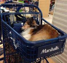 Shopping is exhausting!
