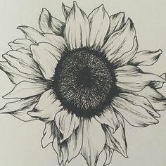 Sunflower Tattoos For Women - Gorgeous Sunflower Tattoos For Women -Gorgeous Sunflower Tattoos For Women - Gorgeous Sunflower Tattoos For Women - Sunshine Love Drawing by J Ferwerda - Sunshine Love Fine Art . Black and White Sunflower Tattoo Designs Future Tattoos, Tattoos For Guys, Tattoos For Women, Cool Tattoos, Tatoos, Female Tattoos, Gorgeous Tattoos, Sunflower Drawing, Sunflower Tattoos