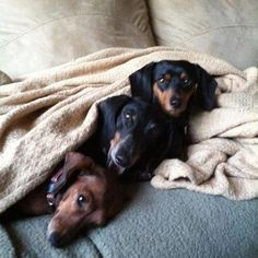 Dachshund pile up Cute Puppies, Cute Dogs, Dogs And Puppies, Animals Beautiful, Cute Animals, Weenie Dogs, Doggies, Dachshund Love, Daschund