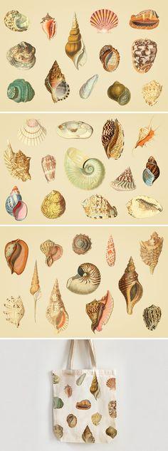 vintage shell illustrations