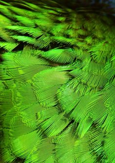 Feathers are pretty cool- where I live, you can only really find brown ones. Wouldn't it be cool to find a bright green feather on the path? World Of Color, Color Of Life, Go Green, Green Colors, Bright Green, Shades Of Green, My Favorite Color, Textures Patterns, Emerald Green