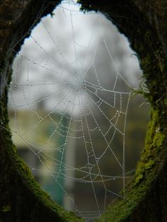 The Hanging Garden. Mother Earth, Mother Nature, Spider Art, Spider Webs, Gray Garden, Dew Drops, Foto Art, Jolie Photo, Fantasy