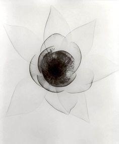 gacougnol: Dr. Dain L. Tasker Lily, an X-Ray ...